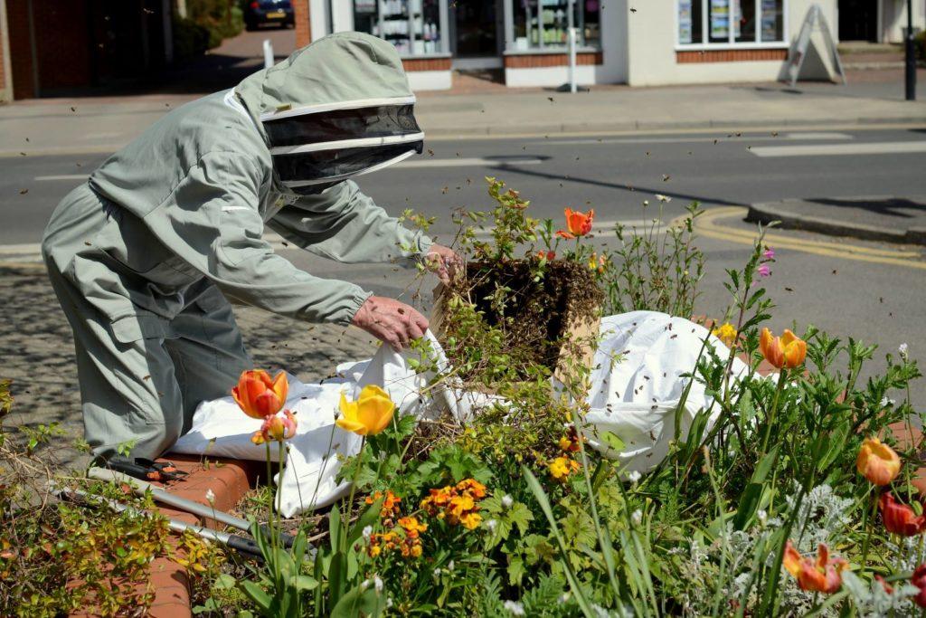 Bee swarm in Cranleigh