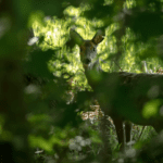 Litter, Roe Deer and a Ghostly encounter