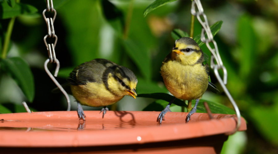 Nick's lockdown diary: Daily exercise and fledgling birds