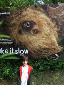 Sloths and their unusual toilet habits