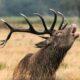 Deer Rut Safari at the Knepp Estate